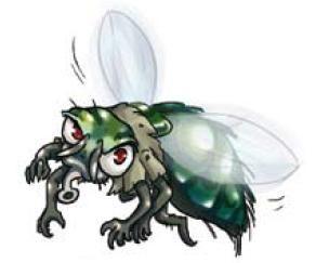 Pas touche la mouche !
