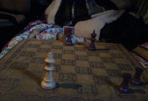 Loïc mets mon roi blanc en mat... d'un classique escalier aux tours
