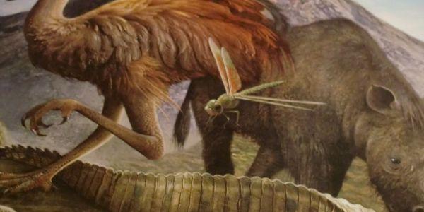 Evoluer ou Périr et devenir la Dominant Species